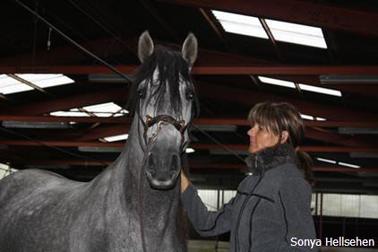 pferd tryptophan wo enthalten